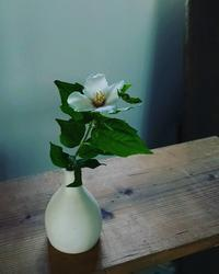 梅花うつぎ - エゾノコ手作り帳