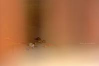 幻@ 散華 - 東大寺が大好き