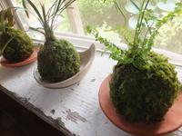 楽しい植木鉢と花器・二人展~3(記録用) - アオモジノキモチ