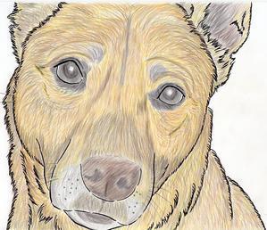 家族募集中のメーガン・色んな表情をします!ご応募お待ちしてまーす!! - 子豚たちの反乱 2  ~保護犬たちの幸せさがし~