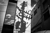 味噌煮込饂飩の老舗で夏を主張する光蜥蜴 - Silver Oblivion
