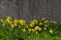 逞しき花 - フォトな日々