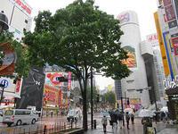 5月21日㈫の109前交差点 - でじたる渋谷NEWS