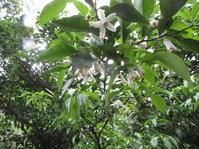 苗の引っ越し/豆のピーク - 南阿蘇 手づくり農園 菜の風