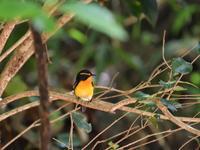 2019 05 21 近見山探鳥、草刈作業に挫折 - soyokaze3の日記