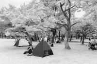 楽しいピクニック - え~えふ写真館