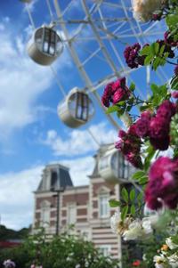 ハウステンボスの薔薇 - 合歓の風