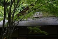 5.18 明月院 - 週末はソニーα6500でぶらり鎌倉・湘南散歩!