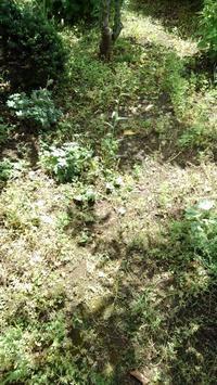 道路側を草取り - うちの庭の備忘録 green's garden