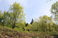 サナエトンボの季節 - 虫籠物語