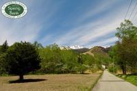 新緑とニリンソウが綺麗な季節♬ - 乗鞍高原カフェ&バー スプリングバンクの日記②