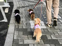 19年5月22日 おちり祭り&サロン&ランチ! - 旅行犬 さくら 桃子 あんず 日記
