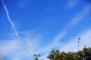 なぜか、飛行機雲とカラス。 - 気楽おっさんの蓼科偶感