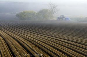 朝霧とトラクター -