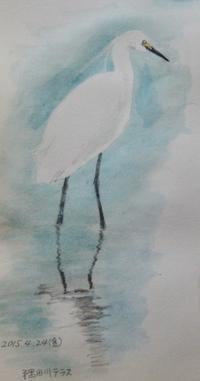 #野鳥スケッチ #ネイチャー・ジャーナル 『小鷺』 Egretta garzetta - スケッチ感察ノート (Nature journal)