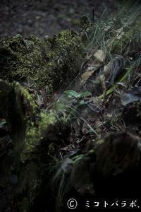 人が一本の木を植えるとき - ミコトバラボ.