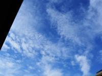 朝の贈り物 (´艸`*) - のーんびり hachisu 日記