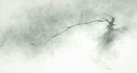 《滝・老木・奇跡の枝・ヤマセミ2》 - 『ヤマセミの谿から・・・ある谷の記憶と追想』