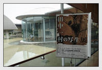奄美大島-11 - Camellia-shige Gallery 2