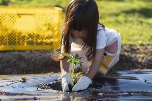 好奇心の芽 - 良え畝のブログ