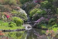 赤城自然園の花 - 上州自然散策2
