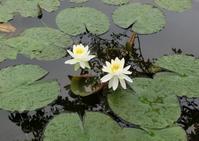 雨の日の大船フラワーセンター(1/2) - hebdo時季(とき)の花