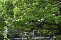 須磨離宮公園バラ - 高原に行きたい