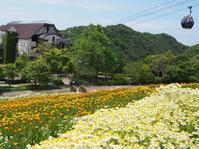 カモミール畑に包まれて、香りを満喫♪ - 神戸布引ハーブ園 ハーブガイド ハーブ花ごよみ