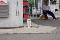 フェリー乗り場の猫 - 春夏秋冬*my story*