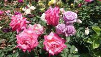 """春と秋、1年にそれぞれ1ヶ月間だけ営業のカフェ「La Vie en Rose」, Cafe """"La Vie en Rose"""" - latina diary blog"""