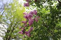 初夏のかおり - polepoleな日々