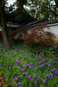 一初咲く上御霊神社 - Deep Season