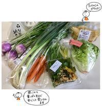 ハイバロさんのお野菜 - 午後二時
