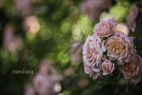 薔薇好き♡キリトリセカイ - MIRU'S PHOTO