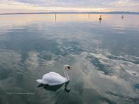ヴェローナから足を延ばして、水の綺麗なガルダ湖へ。 - イタリアワインのこころ