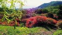 伊香保早春賦・・・長峰公園のヤマツツジの紅に染まって来た(^-^♪ - 『私のデジタル写真眼』