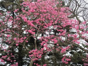 塩原 新緑の八方ヶ原で春の宝探しのようなハイキング     Mount Takahara in Nikk? National Park - やっぱり自然が好き
