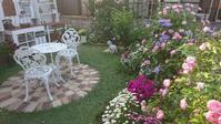 裏庭の様子 - Rose & Mary