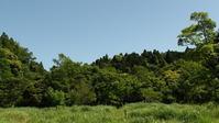 今年の水路では・・ - 千葉県いすみ環境と文化のさとセンター