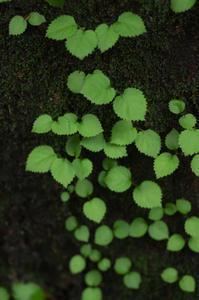 葉っぱの世界 - 花と風景 Photo blog