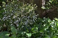 5月の庭仕事 - refresh-3