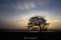 田んぼの朝 - ekkoの --- four seasons --- 北海道