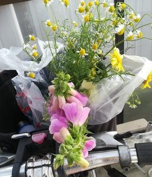 自転車に、庭の花を摘んで出勤 - 今日も自転車で行く?