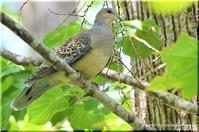 野幌森林公園で野鳥に癒される - 北海道photo一撮り旅