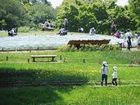 昭和記念公園 GWの頃5 - 光の音色を聞きながら Ⅳ