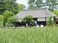 昭和記念公園 GWの頃ラスト - 光の音色を聞きながら Ⅳ