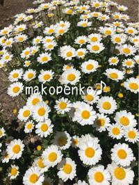 巣箱の取り付けとお庭のお花♪ - まこぺんこ's  WORLD      のんびり安曇野ぐらし♪