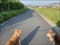 令和元年5月23日朝散歩 - あずきのばあばの、のんびり日記
