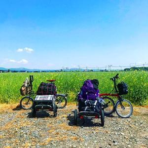 菜の花ポタリングツアーのお誘い - 秀岳荘自転車売り場だより