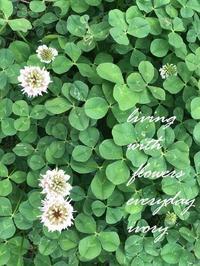 薄暑 -  Flower and cafe 花空間 ivory (アイボリー)